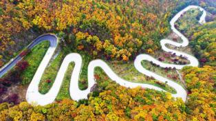10월의 국유림 명품숲 '속리산 말티재 숲' 선정